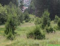 изсечена полоса от гората
