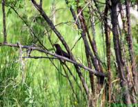 птичка в храст
